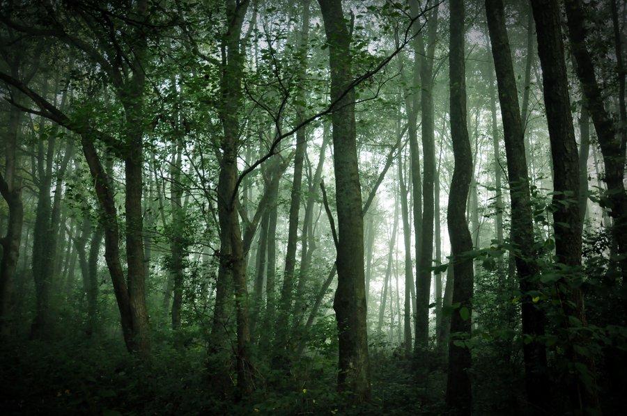 myscital_forest_by_foto_graf_hi