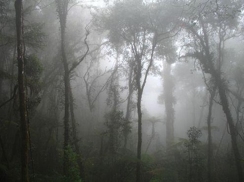 borneo-forest-kinabalu-mist-fog