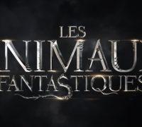 Les Animaux fantastiques : belle surprise !