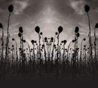 Dead Can Dance : entre world music et musique historique, pour un voyage intemporel